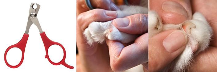Как коту подстричь когти в домашних условиях